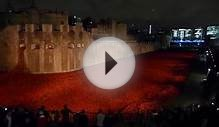 Tower of London Poppy Tribute at Night, Remembrance Day