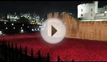 We visit Tower of London Poppies at Night